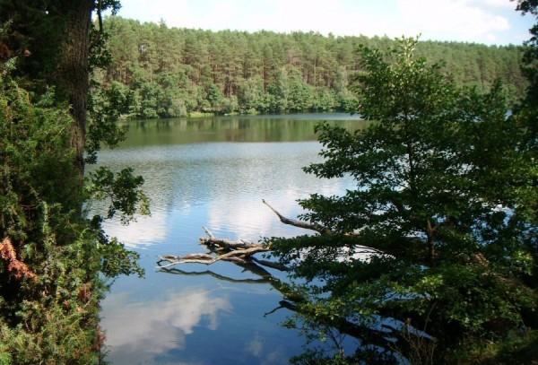 Jezioro Płęsno