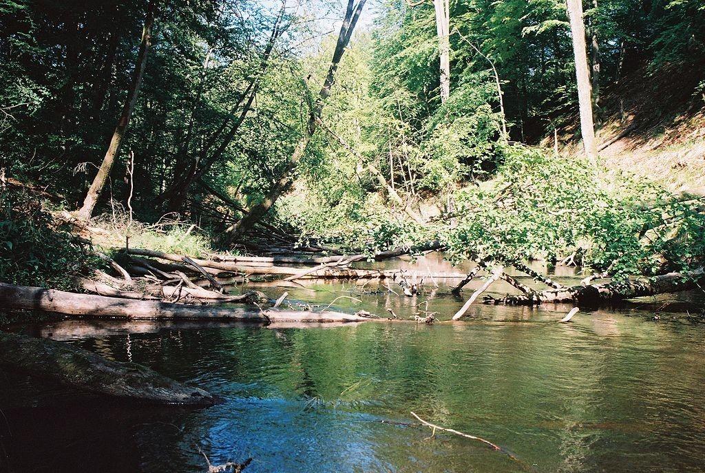 Rezerwat Przyrody Przytoń