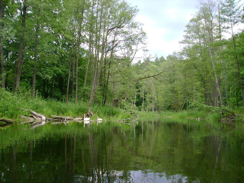 Rezerwat Krutynia Dolna