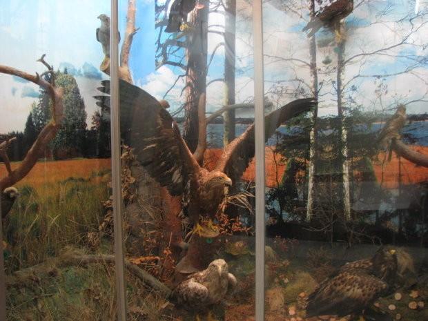 Muzeum Przyrodnicze przy Mazurskim Parku Krajobrazowym
