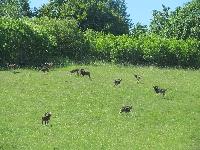 Ferma jeleniowatych w Kosewie Górnym