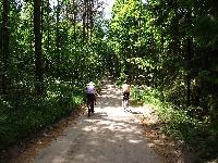 Lasy Sorkwickie